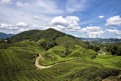 TWB_7534 (xxtreme942) Tags: malaysia cameronhighland hill teaplantation sky cloud nature landscape outdoor
