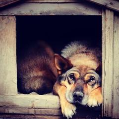 Melancholy #dog #rex #old #alone #melancholy #canon #canon_eos_77d #anymal (N.A. Dikin) Tags: dog rex old alone melancholy canon canoneos77d anymal