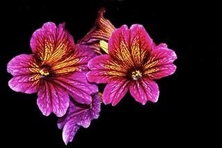 Toronto Ontario ~ Canada ~ Edwards Gardens ~ Botanical Garden - Exotic  Flower