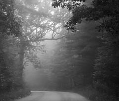 Foggy Breezemont Drive #1 (D700) (ssepanus) Tags: sepan pa pennsylvania clarion leeper brezemont nikon d700 lightroom opticspro fog mist