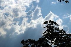 As Above So Below (gripspix (OFF)) Tags: 20180723 nature natur plant pflanze tree baum sky himmel wpfel treetops clouds wolken
