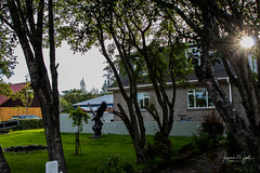 IMG_6600 (Islandsmjoll.is) Tags: 2018 hveragerði iceland icelandicmysteryis island beautiful blóm flower gufa hotspring hverabrauð is islandsmjoll mystery mystoppover steam tree tré visiticeland