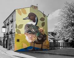 Flower Duck @Curtis_hylton 2 (PDKImages) Tags: blackburn blackburnopenwalls blackstreetart street art streetart colours mural wallart wallporn walls makeblackburnbeautiful graffiti urbanart