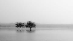(bhanuprakash.in) Tags: man made lake hesaraghatta arkavathy river bangalore benagluru karnataka black white monochrome nikon photography travel diaries trees nature