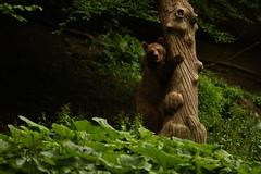 Ms Brown Bear Exploring (Derbyshire Harrier) Tags: 2018 june ursusarctosarctos brownbear naturetrek romania evening transylvania bridge female deadtree wild explore exploring climbing