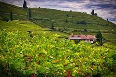 Kaltern, St. Josef (Holgi_BS_63) Tags: holgibs63 weinberge bauerbhof wolkengrün green südtirol southtyrol italien italy italia altoadige kaltern caldaro