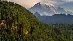 Rainier Beyond (www.mikereidphotography.com) Tags: aerial drone rainier forest mountain landscape dji