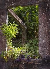 Green Window (judyclayton) Tags: cassowary coast farnorthqueensland cassowarycoast paronellapark missionbeach