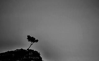 Lonely Tree!!!