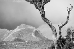 Bough (Rico the noob) Tags: dof bokeh d850 landscape nature outdoor 2470mmf28 published monochrome 2018 closeup 2470mm tree bw sky teneriffa blackandwhite tenerife
