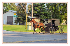 Traveling the Old Fashioned Way in Amish Country (sjb4photos) Tags: indiana middleburyindiana amishbuggy alltypesoftransport