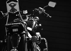 Honda Shadow (Lisa M / /) Tags: motorbike motorcycle honda hondashadow bike biker blackandwhite blackandwhitephotography bw bwphotography motorbikesmotorcyclesopen toall nikon nikond5100 nikonaustralia nikondslr
