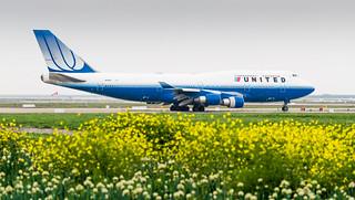 Blue Tulip 747