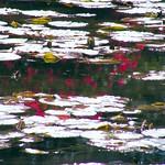 Red Reflection thumbnail