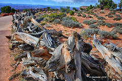 Rough Wood Fence_187494 (rjmonner) Tags: fence sand red detail wood southwest utah canyonlands weathered piled stacked stack utahparks nationalparks grandviewpoint nationalparkservice driftwood wilderness rock coloradoplateau hike weatheredwood dry