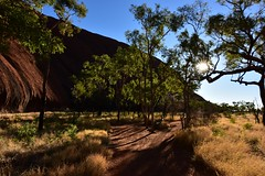 Early Morning Uluru (Harald Philipp) Tags: uluru ayersrock australia sunrise trees rock grass path sun sunlight