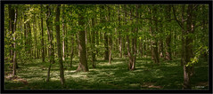 stitch of 4 images with Sony FE 85mm/1.8 on A7RII (Dierk Topp) Tags: a7rii a7rm2 bäume ilce7rii ilce7rm2 sonya7rii sonyfe85mm18 panorama sony trees wald wood