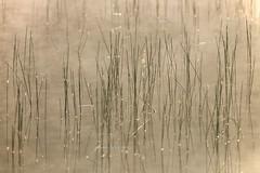 180520_015 (123_456) Tags: parkdehogeveluwe hoge veluwe nederland gelderland otterlo hoenderloo schaarsbergen