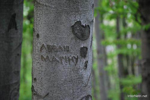 Ботанічний сад імені Гришка Буковий гай InterNetri  Ukraine 103