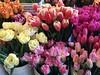 An Array of Tulips (jchants - offline for a bit) Tags: 118in2018 48abundance tulips pikeplacemarket seattlewa market marketvendor marketstall