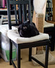 Carl the Conqueror (lennycarl08) Tags: carl lennyandcarl lc cat cats blackcats