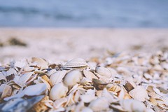 Sunshine and Seashells (tanyalinskey) Tags: sunshine shell ocean sea beach seashells macro sand