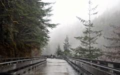 Trestle Road (Katy on the Tundra) Tags: juneauakaska trestle rainforest robertsmountain