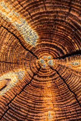 Annual rings. annual tree rings close-up (AudioClassic) Tags: old wood brown wall pattern copyspace wooden plank surface texture hardwood retro background panel textured grunge nature timber board dark design vintage material floor rough natural abstract dirty color grain grungy weathered backdrop table construction structure carpentry pine frame aged grey rustic exterior desk tree closeup stain row wallpaper decorative