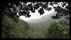 Wald / Forest (Sam H. Maas) Tags: wald forest natur nature baum tree outdoor lagomera totale berge mountain grün green landschaft landscape