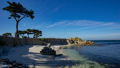Spring Time in Monterey Ca (jw7113) Tags: pentaxk3 monterey pacific grove asilomar beach lovers point