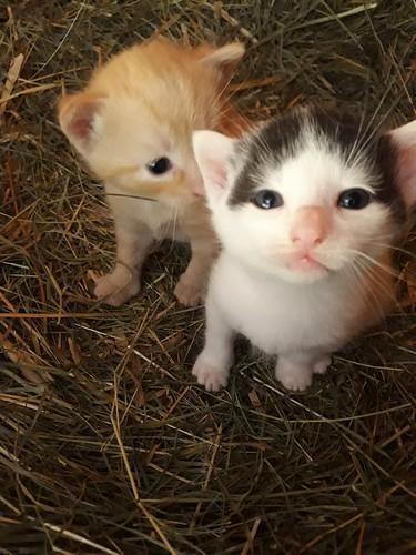 Die Kätzchen sind schon neugierig auf den Miniponyhof