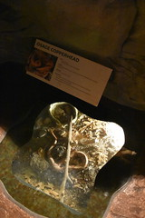 Osage Copperhead (Adventurer Dustin Holmes) Tags: 2018 wondersofwildlife osagecopperhead copperhead snake animal reptile poisonoussnake ozarks missouri venomoussnake animalia chordata
