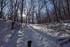 Cortana at Wild River State Park (Tony Webster) Tags: cortana minnesota wildriverstatepark dog snow statepark winter centercity unitedstates us
