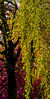 18-04-18 up rot grün vert  dsc09373-1 (u ki11 ulrich kracke) Tags: blüterot sh upright grün vertikale baum kontrost