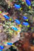 20170715-DSC_0075.jpg (d3_plus) Tags: 南伊豆 southizu drive fish marinesports apnea izu ucl165m67 j4 underwater nikon1 景色 魚 風景 watersports sky 水中 185mm マリンスポーツ japan closeuplens ニコン 50mmf18 50mm sea nikonwpn3 nikon 素潜り クローズアップレンズ ウォータープルーフケース nikkor skindiving スキンダイビング nikon1j4 inonucl165m67 wpn3 海 snorkeling ニコン1 1nikkor185mmf18 port scenery 息こらえ潜水 ズーム 185mmf18 inon 空 日本 diving waterproofcase シュノーケリング zoomlense