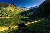 20170830-Canon EOS 6D-3218 (Bartek Rozanski) Tags: schladming steiermark austria duisitzkarsee lake mountains alpine alps austrian styria cow afternoon summer duisitzkar