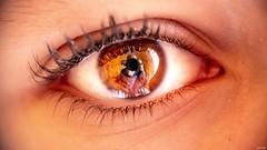 « L'oeil humain est le plus perfectionné des objectifs, l'appareil photographique n'est que son prolongement. » Remy Donnadieu.  #eye #eyebrows #photographer #reflection #objectif #family #gx80 #macro #color #lumix #leica #lightroom (Lexlutin66) Tags: eye eyebrows photographer reflection objectif family gx80 macro color lumix leica lightroom