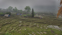 Sapa-Hmong Village, Paddy fields in the fog (Gilama Mill) Tags: village hmong rain fog paddy field sapa asia landscapes people travel vietnam