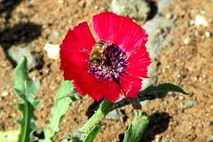 . (ebruzenesen - esengül) Tags: türkiye ankara hallaçlı gölbaşı göl konak çömlek çiçek sevgi çamur toprak testi manzara dinlenme akağaç hasekiküpesi bitki endemik tohum