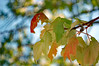 Leaves And Sky. (dccradio) Tags: lumberton nc northcarolina robesoncounty outdoors outside leaf leaves foliage tree trees stick sticks branch branches treebranch treebranches nikon d40 dslr plant nature natural saturday saturdaymorning morning goodmorning