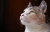 My Sweet Milly (Lon Winchester Photography) Tags: gatos gatinhos gatinhas canoneos6d canonef50mmf18stm kitten cats mycat lovelycats beautifulcats catsportrait studiocat studiokitten retratodegato highiso nogranulation