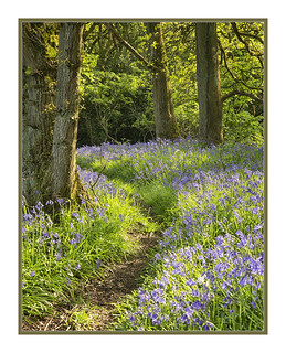 Scented path