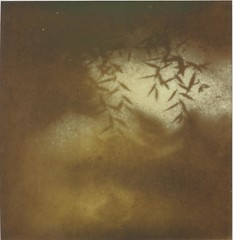 Leaves of shadow. Six (...The Man From The Past...) Tags: impossiblei1 px600 polaroid theimpossibleproject analog film polaroidweek