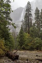 Lower Yosemite Falls (thefuton) Tags: yosemite nature travel yosemitenationalpark water