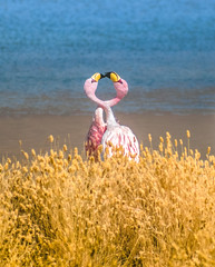 Amour Rose (ThibaultPoriel) Tags: flamingo kiss love amour animal wild nature landscape scene scenic scenery colors moment bolivia bolivie southamerica america travel outdoors discover exploration