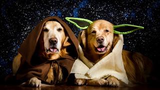 Luke Skybarker and Yodawg