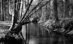 Cold river (Rosenthal Photography) Tags: landschaft bnw schwarzweiss asa200 35mm wald städte ff135 zeven ahe 20180401 rodinal15021°c10min infrarot ilfordsfx rotfilter olympus35rd analog bw dörfer siedlungen river cold spring march forest trees landscape nature mood blackandwhite olympus olympus35 35rd fzuiko zuiko 40mm f17 ilford spx spx200 redfilter red filter rodinal 150 epson v800