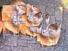 2018 - Mika (bDom [+ 4 Mio views - + 48K images/photos]) Tags: bdom dessin art digital ipad chat cat mika félin