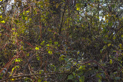 A Natural Chaos Of Colorful Nature (Modkuse) Tags: nikonfx landscape color nature intimatelandscape rural trees nikon nikondslr nikond700 tokina tokinaaf2870mmf2628