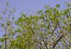 20180421-0I7A4127 (siddharthx) Tags: bird birdwatching birdsinthewild birdsofindia canon canon7dmkii catchment chandrampally chandrampallydam chandrampallynaturereserve chincholi chincholiforest chincholinaturereserve dawn daytrips ef100400mmf4556lisiiusm forest goldenhour gottamgutta habitatscrubland pristine promediageartr424lpmgprostix reservoir rivulet scrubforest sunrise telanganakarnatakaborder wild wildbirds wildlife gottamgotta karnataka india in purplesunbird sunbird